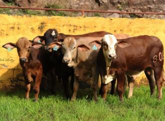 Criadores de ganado buscan reducir huella de carbono