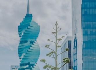Más de 90,000 viajeros se hospedaron en un Airbnb en Panamá