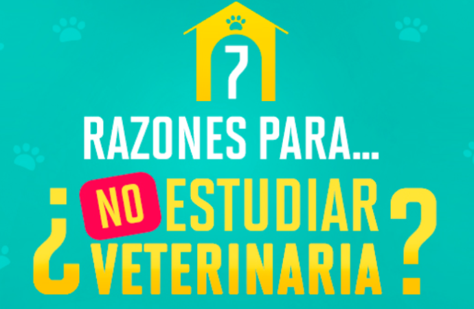 Te presentamos 7 razones por las cuales deberías estudiar veterinaria