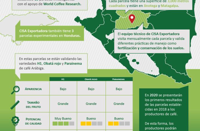 Grupo Mercon investiga nuevas variedades de café