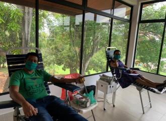 Donaciones voluntarias de sangre aumentaron un 240% en lo que va del año