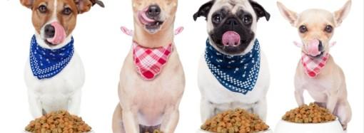 Hidratación y alimentación balanceada durante la cuarentena y desconfinamiento de mascotas