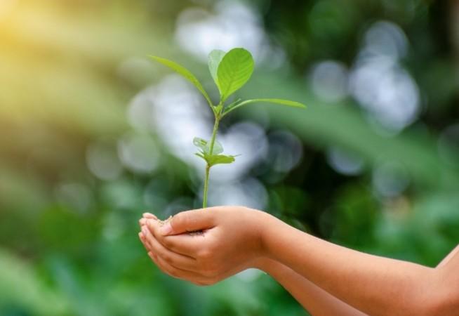 Nestlé se une a más 150 transnacionales para impulsar una recuperación post COVID-19 alineada al combate del cambio climático