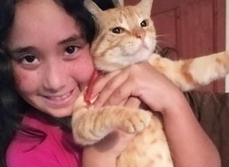 Día del Gato: ¿cuál es la mascota preferida en América Latina, el perro o el gato?