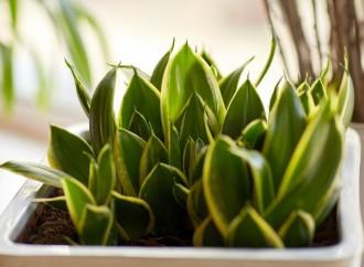 ¿Sabías que tus plantas te ayudan a ahorrar?