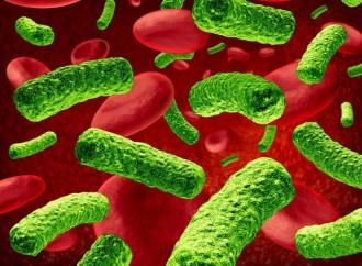 ¿Cuáles son las superbacterias que pueden generar una sepsis y resistencia a los antimicrobianos?