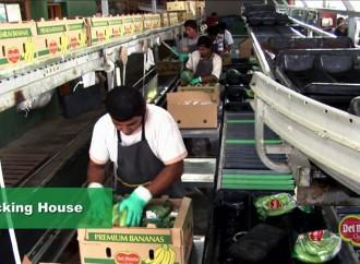 Gobierno y empresa Del Monte avanzan para la reactivar la zona bananera del distrito del Barú