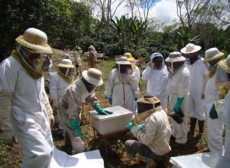 MIDA realizó simulacro de infestación del escarabajo de las colmenas