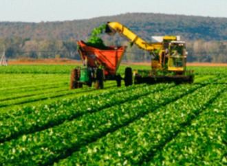 Uruguay prevé el 2017 aumento de exportaciones de carne bovina, lácteos, arroz y soja