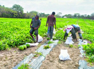 El INA implementaráCarrera de Técnico en Fruticultura