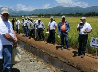 Gobierno dominicano anuncia mejoramiento genético en dos variedadesdel arroz