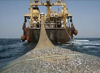 FAO insta a los países a sumarse al tratado contra la pesca ilegal