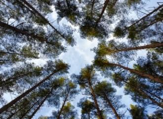 5 de junio, Día Mundial del Medio Ambiente: Operaciones sostenibles en beneficio del planeta
