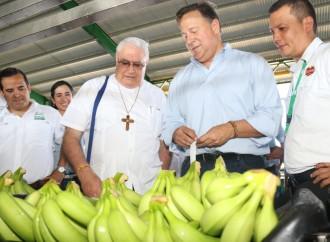 Banapiña realiza exitosaexportación de las primeras 3 mil cajas de Banano almercado de los Estados Unidos