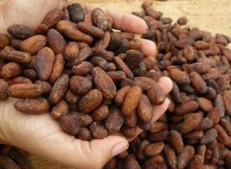 Chocolate panameño gana otro certamen internacional