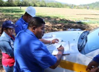 Empresas agroexportadoras en Veraguas acatan normas contra el Trabajo Infantil