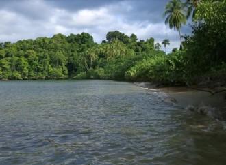 La SENACYT y la Ciudad del Saber realizan el Café Científico virtual 'Biodiversidad y estado de conservación del Golfo de Chiriquí y el Golfo de Montijo'