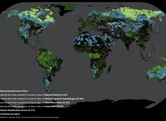 Científicos lanzan un «esquema» para salvar ecosistemas críticos y estabilizar el clima del mundo
