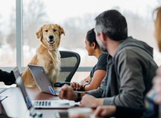 Emprendedores se unen y crean la primera red social para mascotas en Panamá