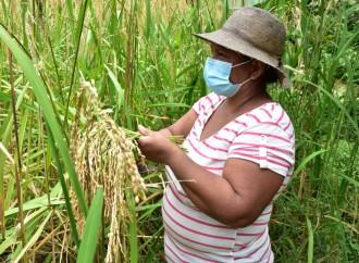 ONU MUJERES lanza la ficha-país que analiza el empoderamiento de las trabajadoras panameñas