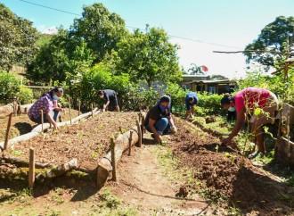 En plena pandemia mujeres rurales de Chiriquí cultivan sus alimentos