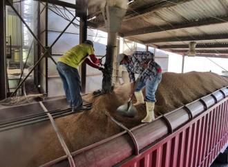 Productores ofertan cosecha de arroz al Gobierno Nacional