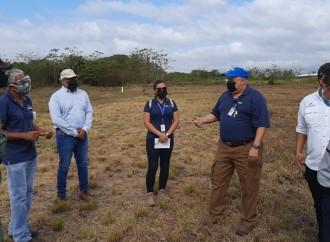 Privados se especializarán en producción de arroz bajo en carbono