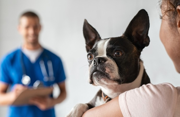 ¿Por qué es importante esterilizar a nuestras mascotas?