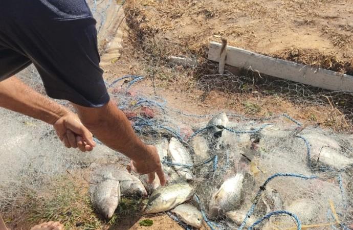 Inicia cosecha de tilapias en Llano Marín