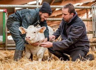 Médicos Veterinarios, aliados para controlar enfermedades de origen animal