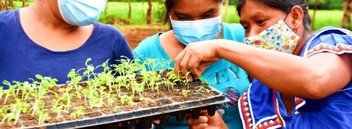 Más de 130 mil mujeres lideran emprendimientos con los programas de Transferencias Monetarias Condicionadas