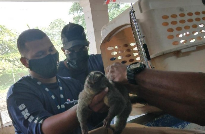 Rescatan mono en Nueva Esperanza