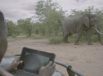 Las estaciones de trabajo móviles de Dell Technologies facilitan las iniciativas de conservación de Elephants Alive en Sudáfrica