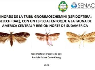 Sustentan tesis doctoral sobre la polilla del tomate en Centro y Sur América