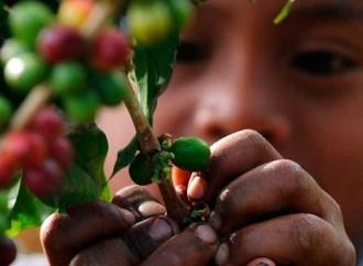 Trabajo Infantil: Realidad y su Impacto en la Sociedad