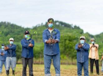 Programa de reforestación de Varela Hermanos, alcanza 32 hectáreas reforestadas en Pesé
