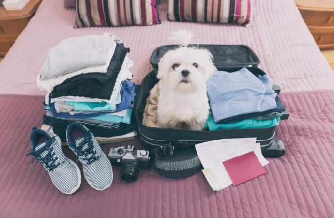 Familias con perros cuentan con más opciones para vacacionar por crecimiento de hoteles pet friendly