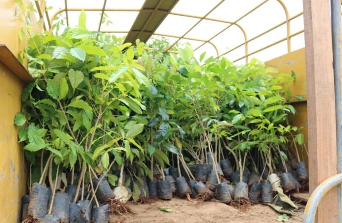 Mingob aporta mil plantones para la reforestación
