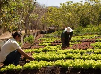 Tres mil personas conocieron las bondades de la agricultura orgánica