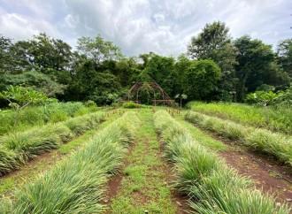 Impulsan producción de plantas medicinales en Playa Tamarindo