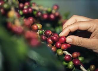 Día Internacional del Café: estos son los descubrimientos de Google y YouTube en Panamá